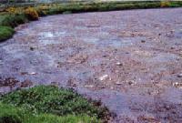Bacterias Aerobias  Anaerobias
