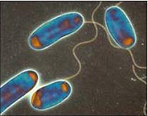 Comprobacion del crecimiento de las bacterias