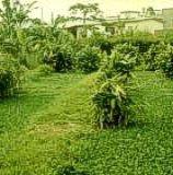 tratamiento aguas servidas con plantas acuaticas