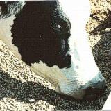 Pellets de Alfalfa por kilo