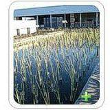 Laguna Artificial FWS Horizontal