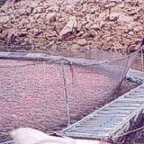 Jaulas para piscicultura aguamarket for Jaulas flotantes para piscicultura